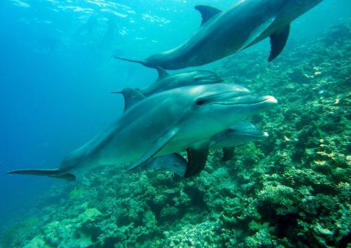 Botschaft der Delfine