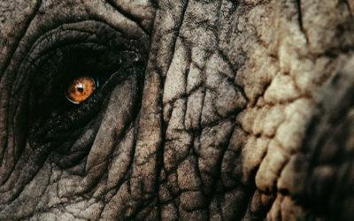 Botschaft Elefantenkuh