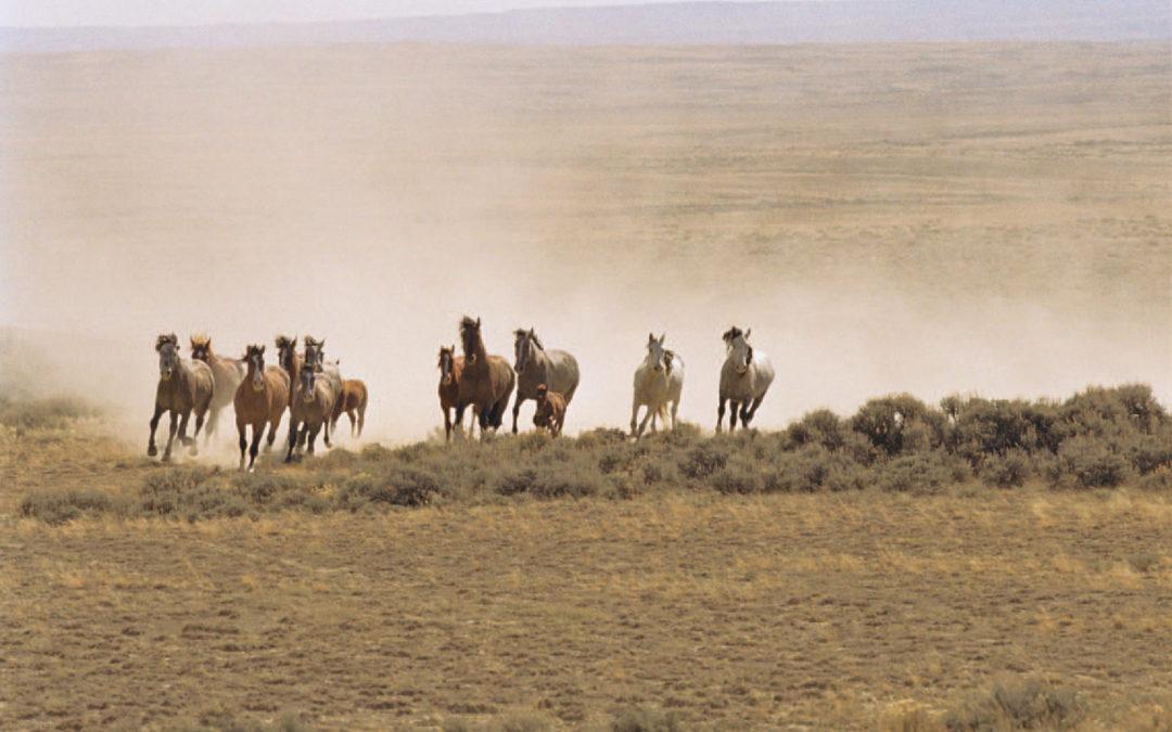 Tierbotschaft Mustang