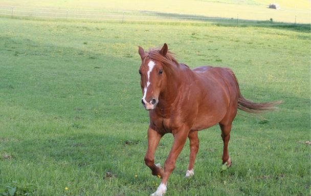 """Gespräch mit Pferd """"Orion"""""""
