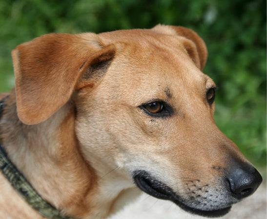 Telepathische Tierkommunikation erlernen